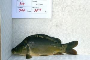 344 - Zeeuw Buitenbeetnje
