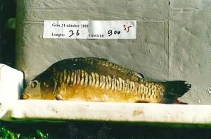 Matchingquiz Nummer 4 - Plank foto A