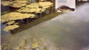 De Kweekvis zwemt haar eerste rondje voor de TBS-kliniek