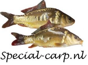 specialcarpnl
