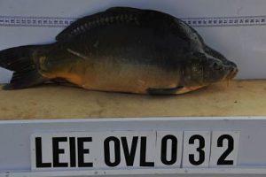 2,4 kg - 22 November 2011