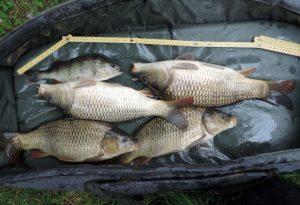 Daags nadien weten vrijwilligers nog enkele leuke vissen te redden