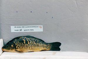 Trouwe Rijen - Plankfoto