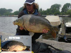Zelfde type, andere vis: een twotone Carpfarmer van het AHV-project