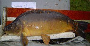 Uitpuilende planken beloven karpervissers meer dan in de regel wordt waargemaakt