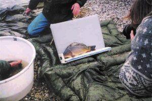 December 2001: SKP Nieuwkoopse plassen bedankt voor de rijenkarpers 2001-Valkenswaard, vanwege het lage uitzetgewicht en koopt een partij consumptiespiegels van Vandeput