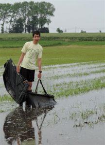 Drie jaar geleden in Vlaanderen: karpers redden in het weiland