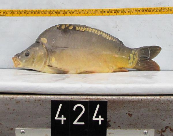 Franse spiegel, in 2011 geleverd aan SKP-KGO (Oost-Vlaanderen)