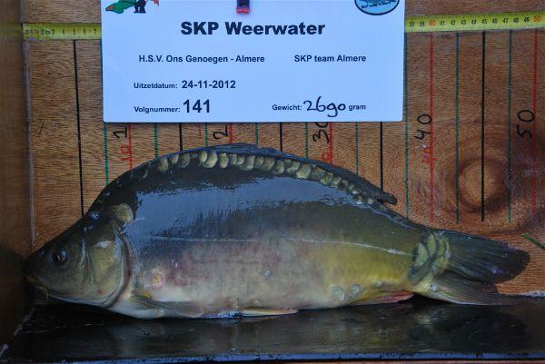 Plankfoto van een 'Pesckkes' 2012 die in 2018 (op afgesloten water) al boven de 20 kg woog!