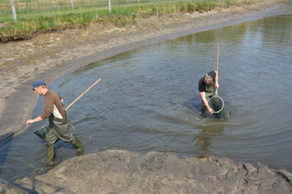Afvissen van de vijvers van Viskweekcentrum Valkenswaard - Mei 2019