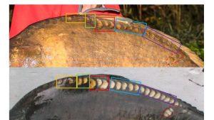 Het patroon van de schubben langs de rugvin leek overeen te komen maar is dit voldoende om een match te bevestigen?