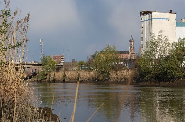 De ruige rivier Zeeschelde, een nieuwe thuis voor deze spiegel van de maand? (foto Ian Thiels)