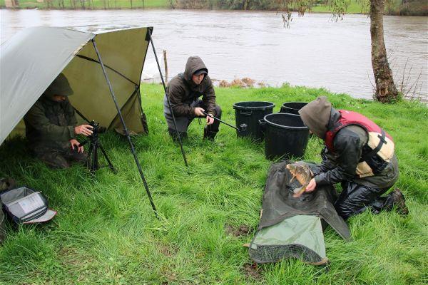 Franse SKP-uitzetting in maart 2020 aan een kolkende rivier (Vienne). De Franse uitzetters waren wel zo verstandig om de vissen met de boot naar luwe gedeeltes te brengen. (Foto: Robert Paul Naeff)
